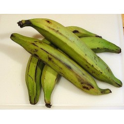 Fresh Whole Green Plantains 5lb
