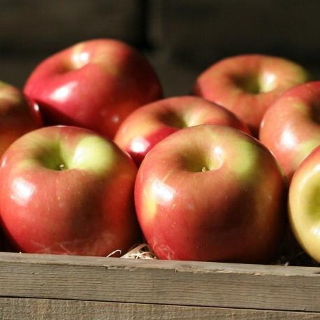 Fuji Apples - 4 lbs - Apples
